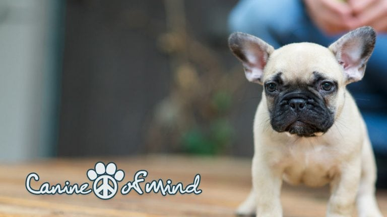 Canine Peace of Mind - Puppies Trained for Your Lifestyle