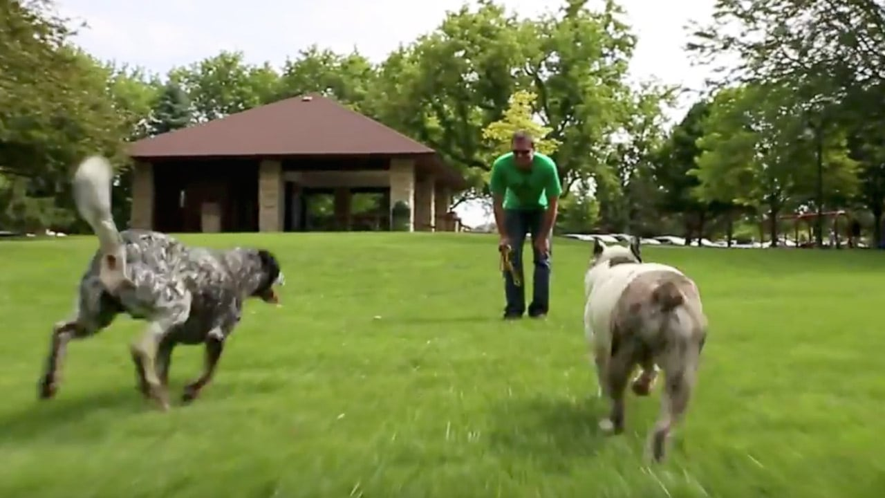 Canine Peace of Mind's Dog Training Video